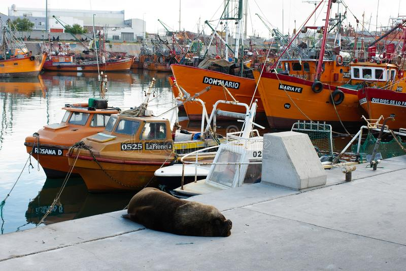 Barcos de pesca e leão de mar em março del Plata imagem de stock royalty free