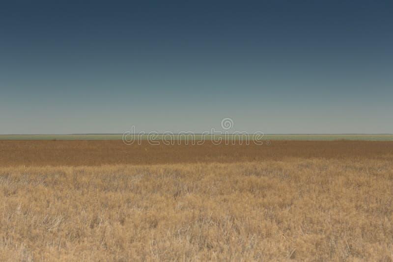 Barcos que reman en las cañas Barco de madera en la orilla herbosa del mar de Aral en un día de verano imagenes de archivo
