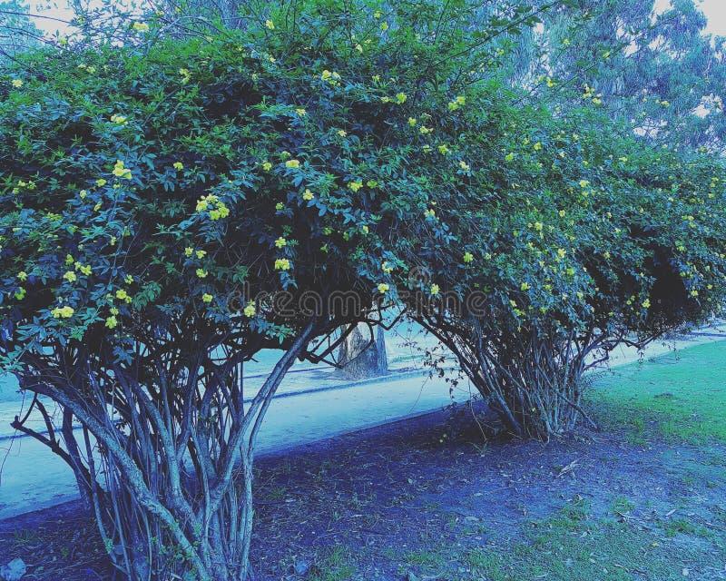 Bardzo ładny drzewo zdjęcia stock