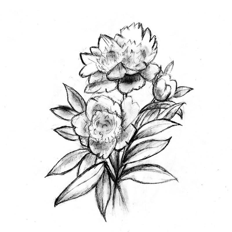 Bardzo ładny nakreślenie kwiaty royalty ilustracja