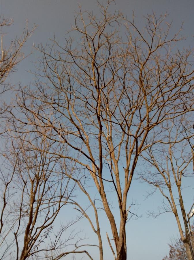 Bardzo dobry drzewo fotografia stock
