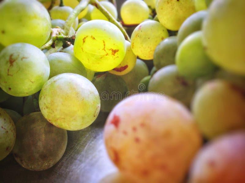 bardzo dojrzali win winogrona, bursztyn zdjęcia stock