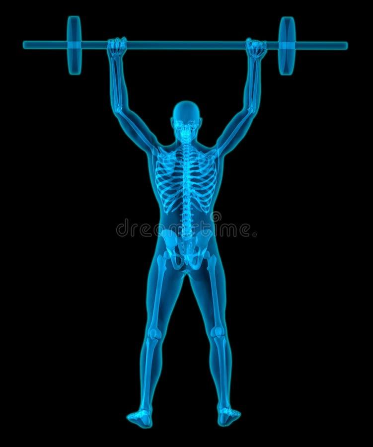 Bardzo medically ścisła i szczegółowa 3D ilustracja mężczyzna udźwigu półprzezroczyści ciężary ilustracja wektor