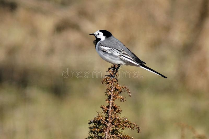 Bardzo niepłonny mały ptak zdjęcie royalty free