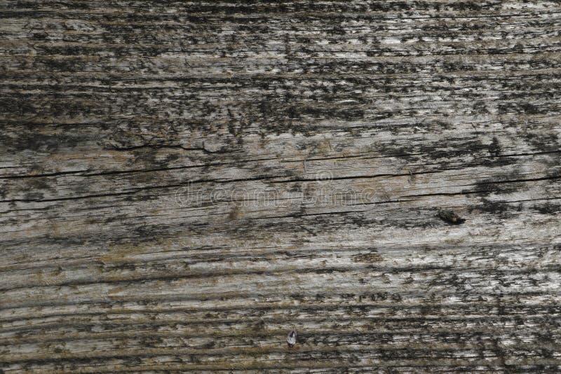 bardzo oryginalna stara drewniana tekstura zdjęcie royalty free