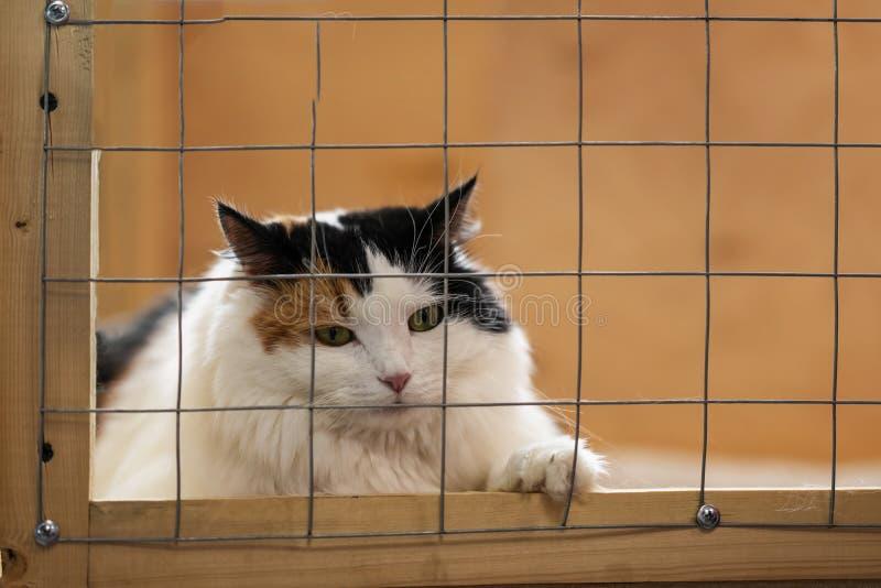 Bardzo osamotniony ale piękny smutny puszysty kot, kłama na klatce w schroniskowym i czekać na właścicielu z domem Poj?cie ludzko zdjęcie stock