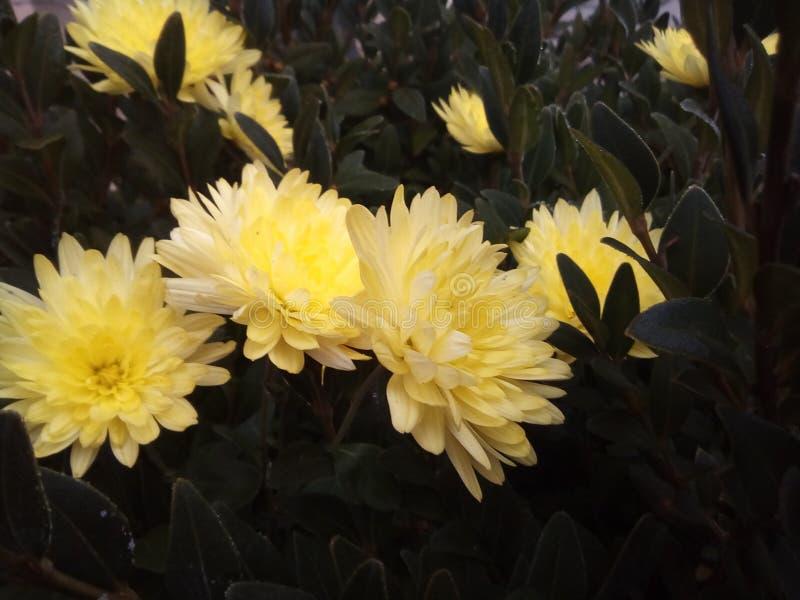 Bardzo piękni kwiaty fotografia stock