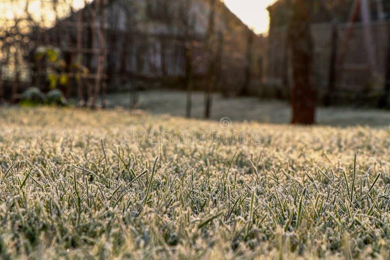 Bardzo pokojowy widok ogród w ranku świetle i uspokajać Trawa jest zakrywającym hoarfrost ale ja no jest śnieżnych tylko kryształ obraz stock