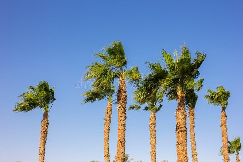 Bardzo silny wiatr w lato kurorcie zdjęcia royalty free