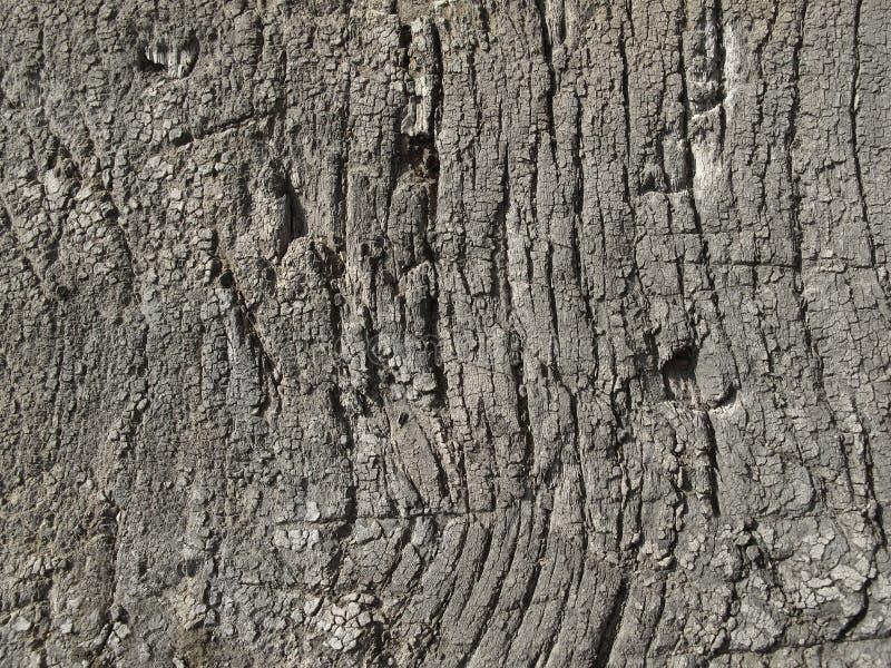 Bardzo stara wietrzejąca drewniana tekstura zdjęcia stock
