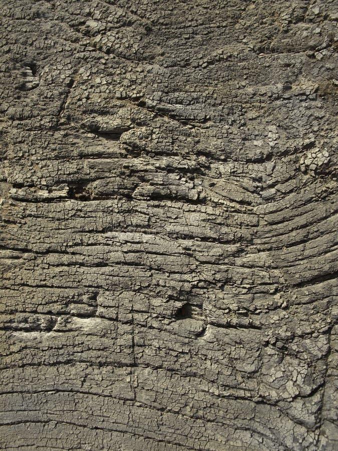 Bardzo stara wietrzejąca drewniana tekstura zdjęcie stock