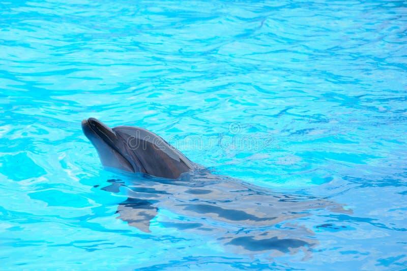 Bardzo szczęśliwi delfiny obrazy royalty free