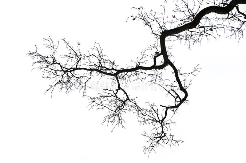 Bare branch on white stock image