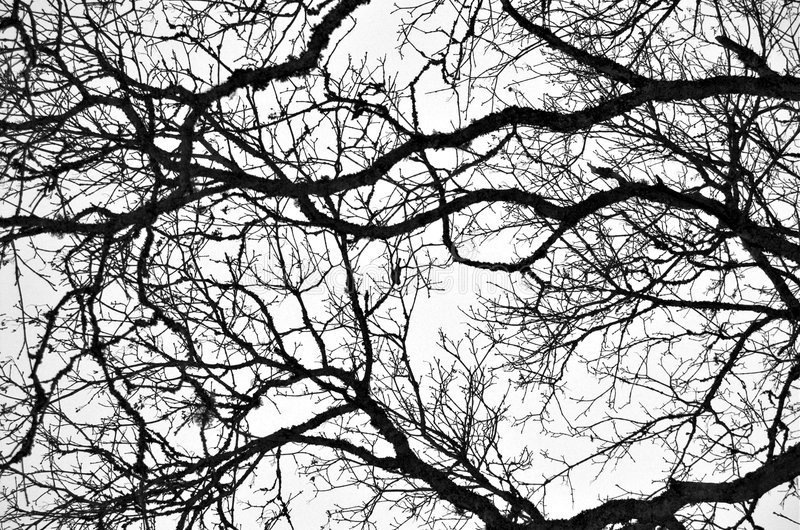 Image result for image bare branches
