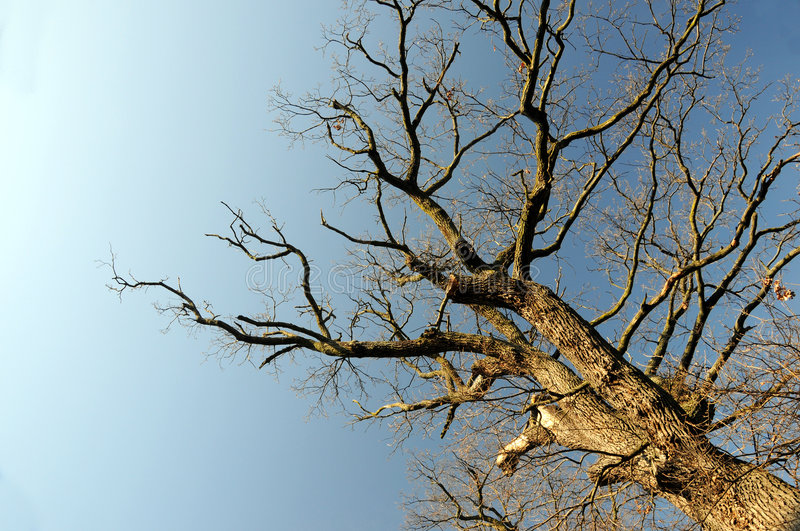 Bare branches. Of dead tree against blue sky royalty free stock photography