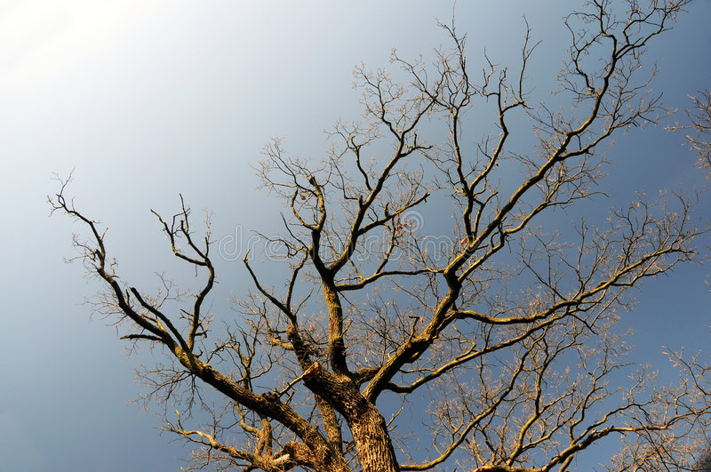 Bare branches. Of dead tree against blue sky royalty free stock photos