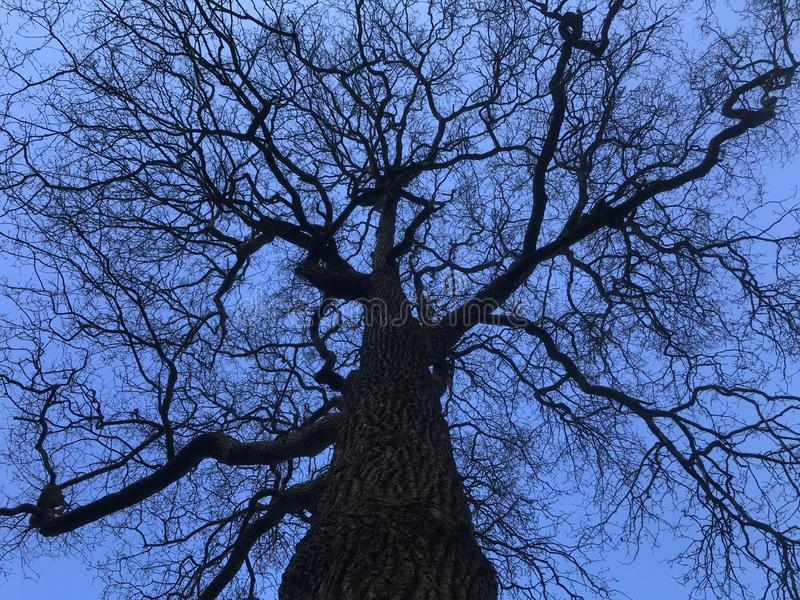 Bare branches of old tree. Bare branches against the blue sky stock photography