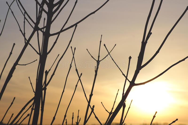 Bare Branches Against Sunset Free Public Domain Cc0 Image