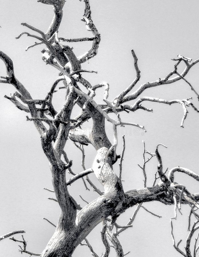 Bare Branches. Black and White bare branches with clear sky royalty free stock image