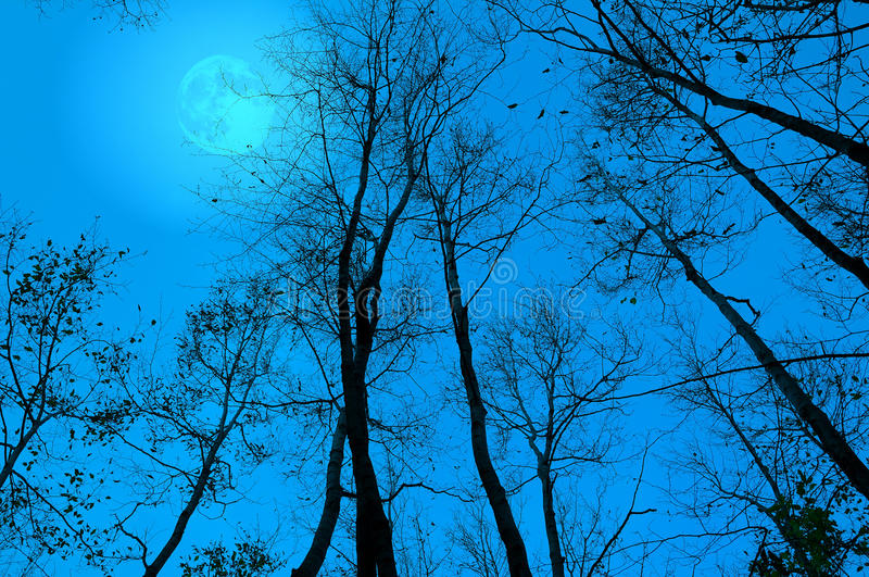 Bare branches at night. Moon behind the bare branches at night royalty free stock image