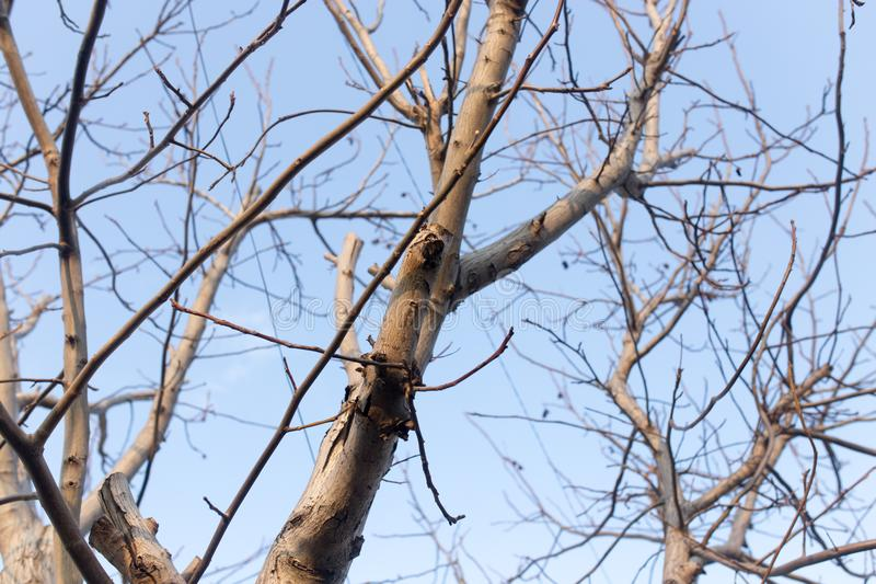 Bare Branches Of An Old Tree In Nature Stock Photo - Image ...