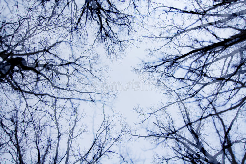 Bare Branches and Sky. A view of bare tree branches and sky after all of the leaves have fallen stock image