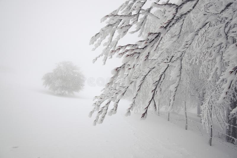 Bare Branches Snow Covered. In Nebrodi Park, Sicily stock photography