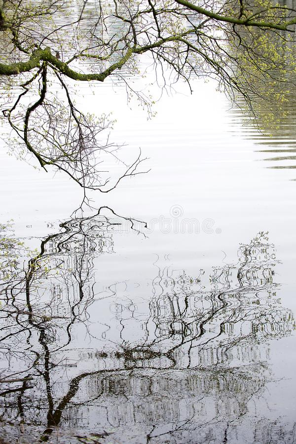 Bare branches of the tree are reflected in the river stock photography