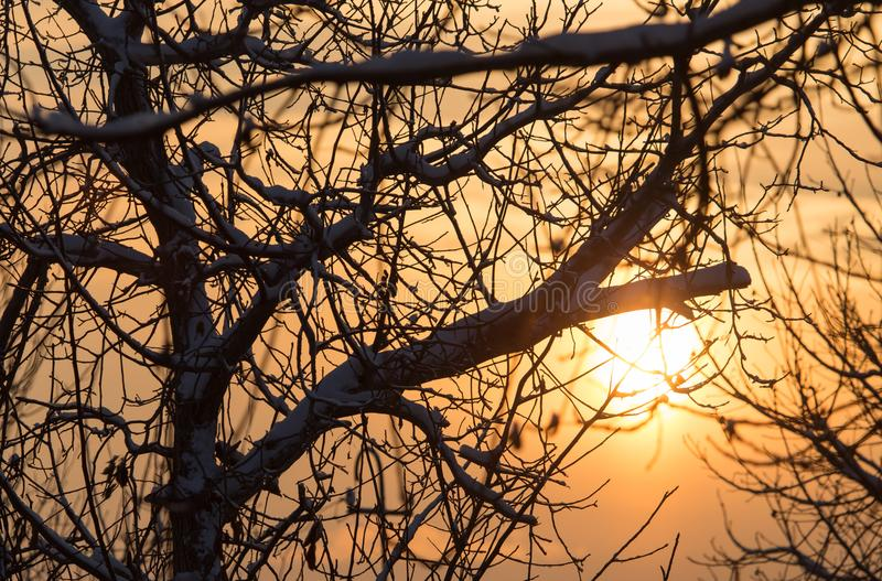 Bare branches of a tree in the sun dawn royalty free stock photography