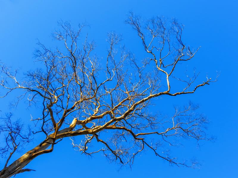 Bare branches under the blue sky 2. Bare branches under the sunny blue sky royalty free stock photos