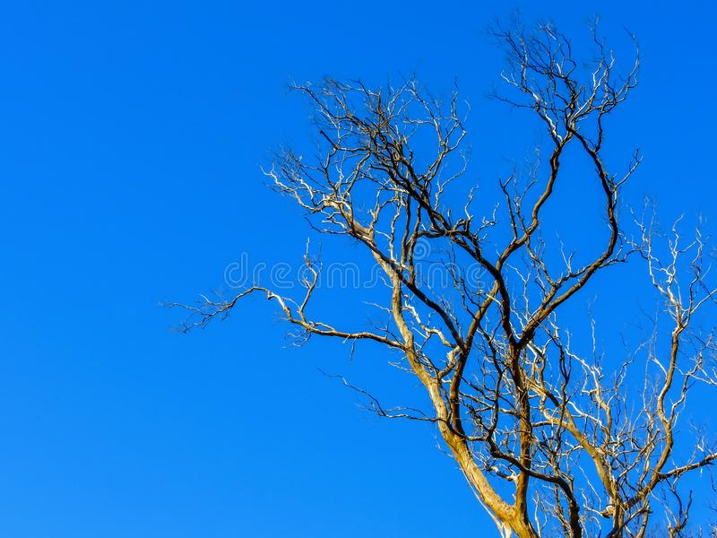 Bare branches under the blue sky 1. Bare branches under the sunny blue sky stock photos