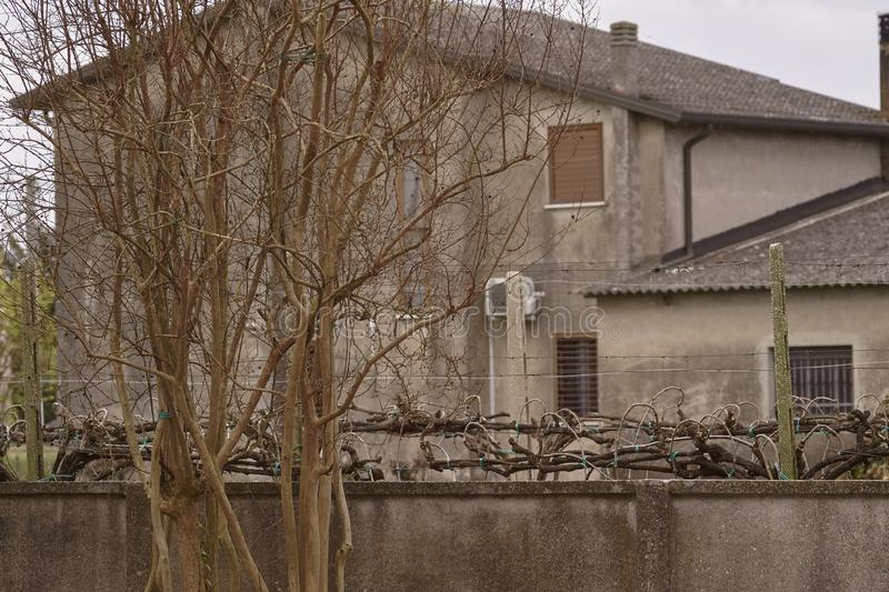 Bare branches in winter. Are the foreground to a gray house typical of northern Italy stock photography