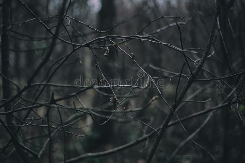 Bare branches in the winter stock image