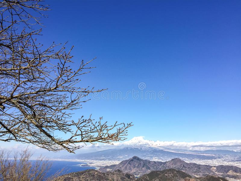 Bare Cherry Blossom Branches with Moutain Fuji in the Horizon. royalty free stock photos