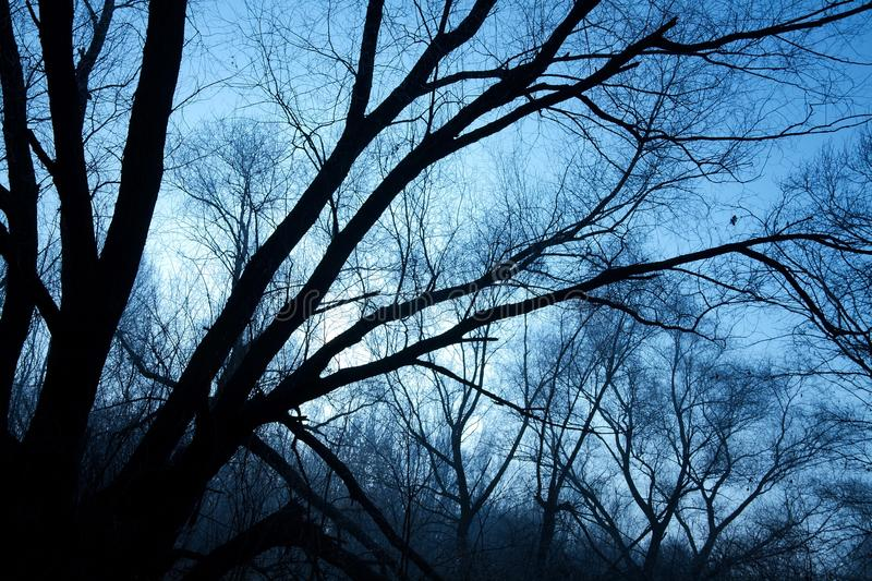 Bare Forest Stock Images