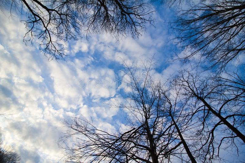 Bare branches of trees against beautiful blue autumn sky with tender white clouds, panorama background royalty free stock photography