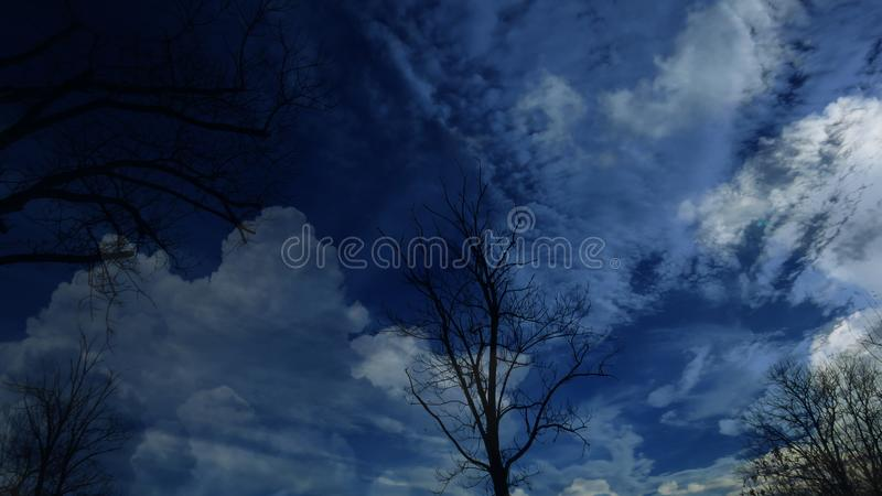 Bare leafless tree silhouettes are on autumn winter dark blue sky full of white clouds background. royalty free stock photo
