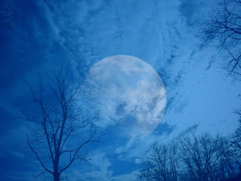 Bare leafless tree silhouettes on dark blue cloudy sky background. stock images