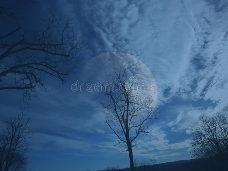 Bare leafless tree silhouettes on dark blue cloudy sky background. royalty free stock image