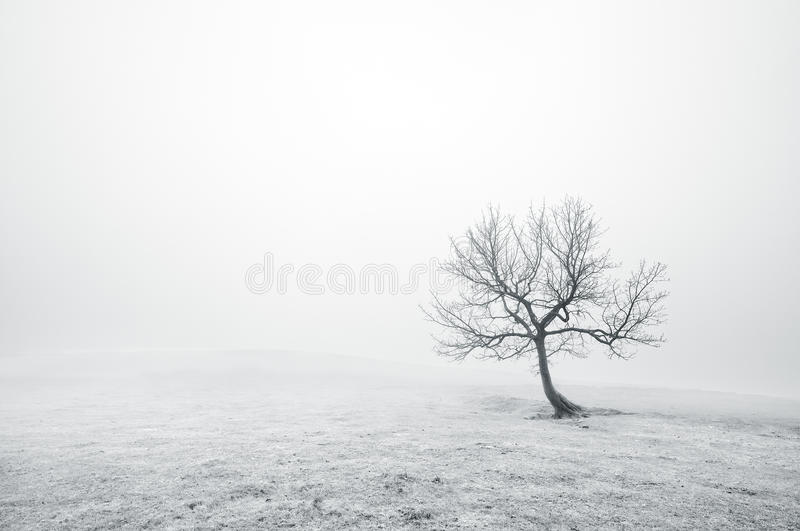 Lonely Black And White Bare Lonely Tree In Bl...