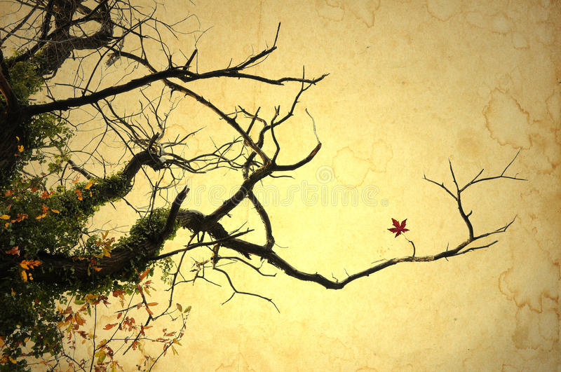 Bare maple branches in autumn. Bare maple branches on stained paper background royalty free illustration