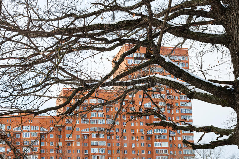 Bare oak tree branches and urban apartment house. View of bare oak tree branches and urban apartment house in winter day royalty free stock photo
