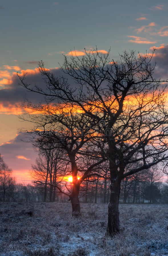 Download Bare Oaks In Early Morning Light Stock Image - Image of rising, sunrise: 28701103