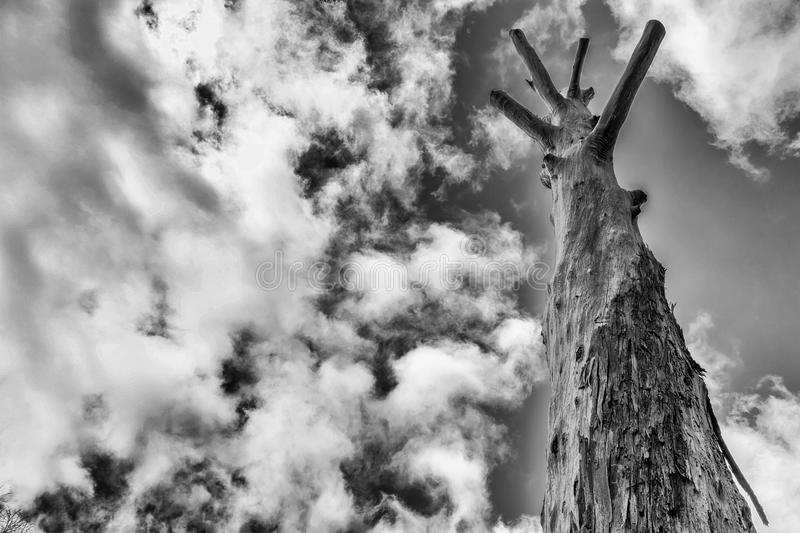 Bare and sad old tree. Black and white photo of bare and sad old tree under the cloudy sky royalty free stock photo