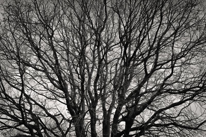 Bare and sad tree branches. A black and white photo of sad intertwined bare branches stock photo