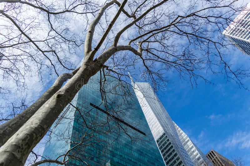 A bare spring tree and a skyscraper over the blue cloudy sky, New York, USA.  royalty free stock images