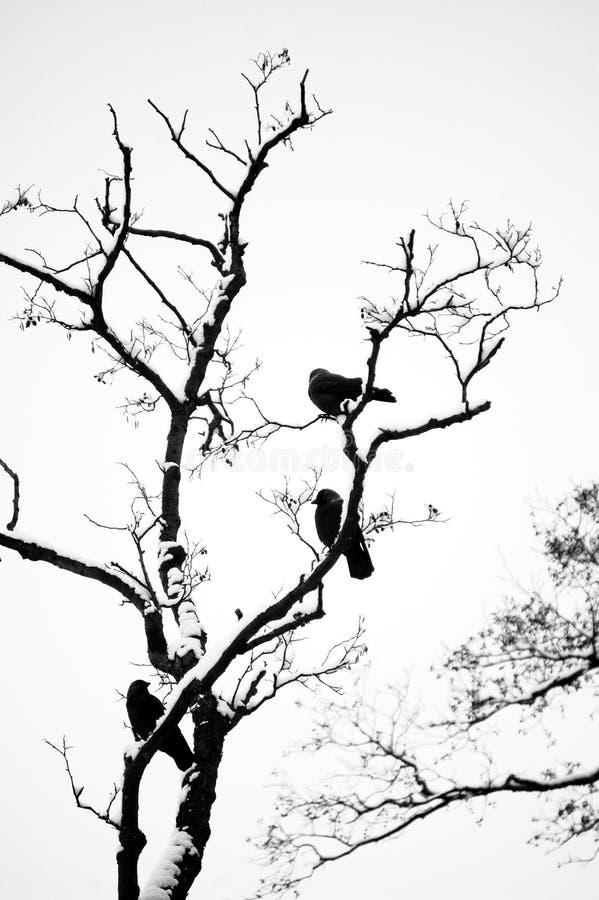 Download Bare tree stock image. Image of spring, winter, barren - 22899603
