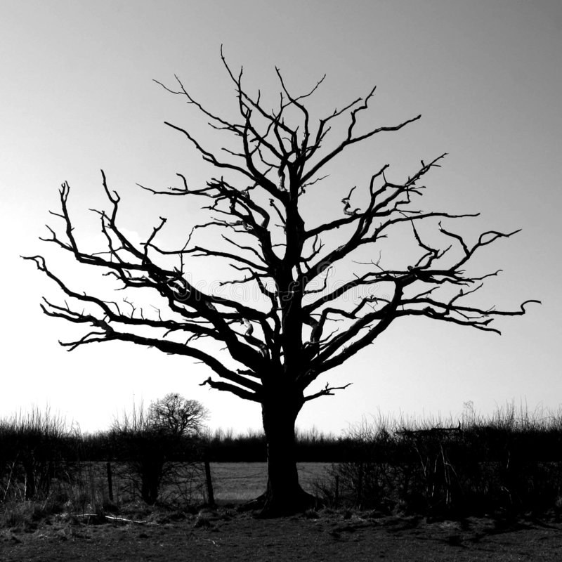 Download Bare tree stock image. Image of brown, plain, arrid, dead - 4450007