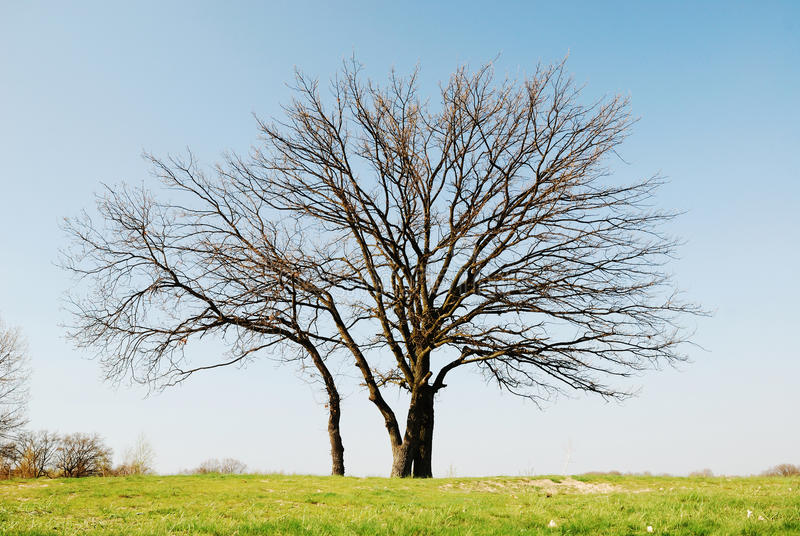 Download Bare Tree Against The Blue Sky. Early Spring Stock Image - Image: 34250367