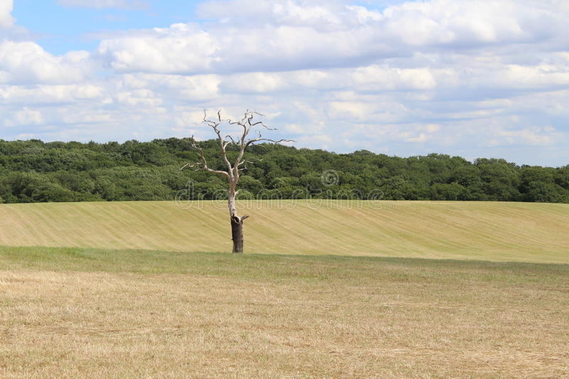 Bare tree in big field royalty free stock photos